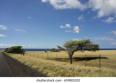 Wind stunted trees grow along fence along long flat road with the ocean and blue sky with clouds in the background.