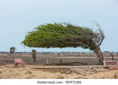 Wind and tree in Luis Correia, Piaui, Brazil