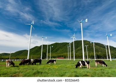 Wind turbine farm and cows