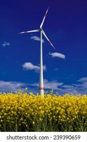 Wind turbine on field of oil rapeseed