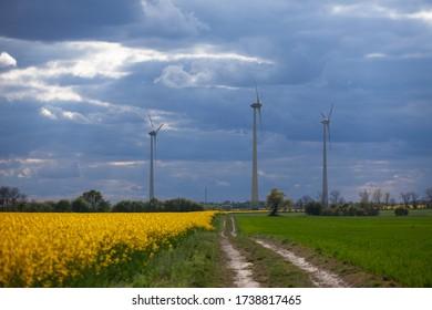 Windturbine in einem gelben Blumenfeld von Rapssamen