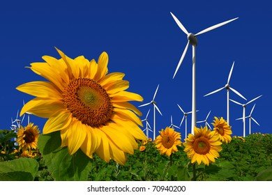 Wind turbines behind a field of sunflowers