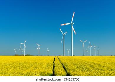Wind Turbines in Canola Field under Blue Sky