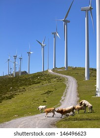 wind turbines with cows