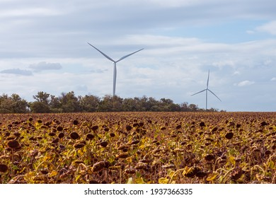 Wind turbines energy converters on yellow sunflowers field on the sunset. Local eco friendly wind farm. Agriculture crops harvest, farming harvesting background. Green ecological electricity wallpaper