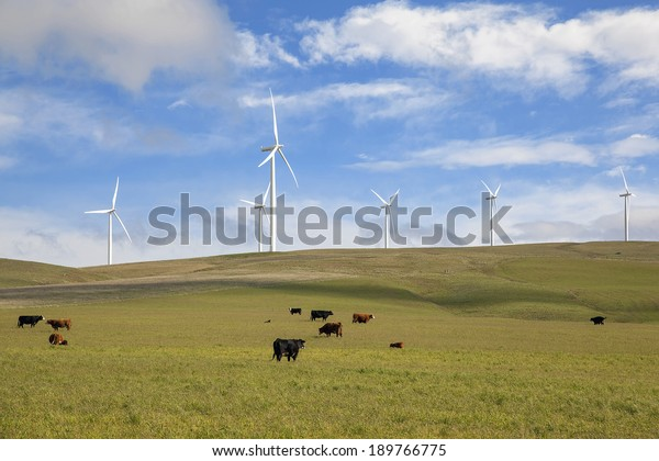 Wind Turbines at Wind Farm by Cattle Ranch Green Pasture in Washington State