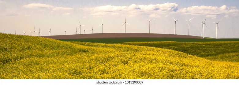 Wind turbines in a field of yellow flowers in Washinton State