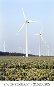 wind turbines and green cabbage field in the province Flevoland in the Netherlands