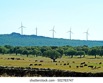 Wind turbines on countryside in Spanish grassland and cows