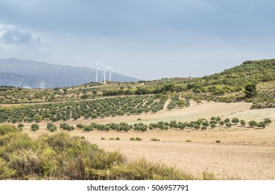 Wind turbines on a hill and olive trees