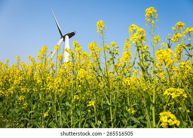 wind turbines in rapeseed field against a clear sky, clean energy concept
