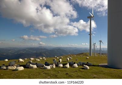 wind turbines and sheep