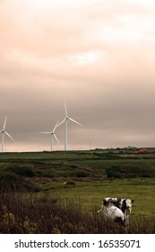wind turbines in tune with the nature that surrounds them