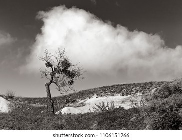 A wind-bent tree and a cloud over it is a monochrome minimalist landscape.