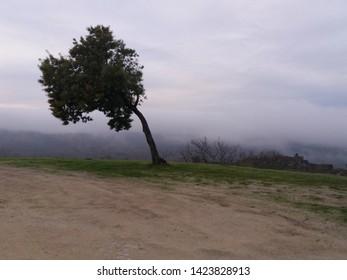 Wind-bent tree - Cloudy Winter