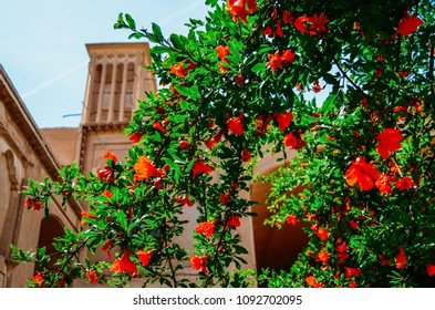 Windcatcher towers is a traditional Persian architectural element to create natural ventilation in buildings, old city Yazd Iran. Roses on the foreground