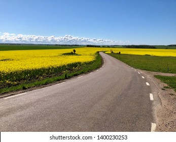 Winding asphalt country road among fields of rapeseed with clear blue sky and some white clouds and green trees in the horizon.
