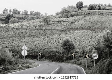Winding asphalt road between vineyards of the River Douro region in Portugal. Viticulture in the Portuguese villages. Black and white photo