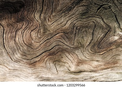 winding bending lines of wood on the tree trunk, horizontal arrangement of wood texture