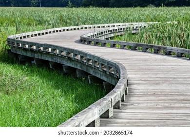Winding boardwalk hiking trail through the wooded marsh