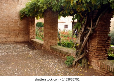Winding branches of wisteria on brick column in the garden of the Alhambra Palace, Grenada, Spain