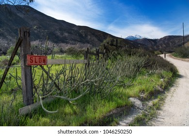 Winding dirt road along a wood fence with a red slow sign with cactus growing along the fence