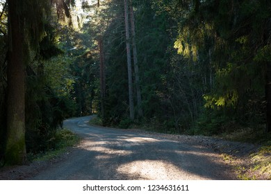 Winding dirt road at forest
