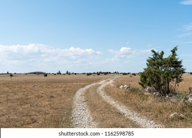 Winding dirt road in a plain and dry grassland at the swedish island Oland