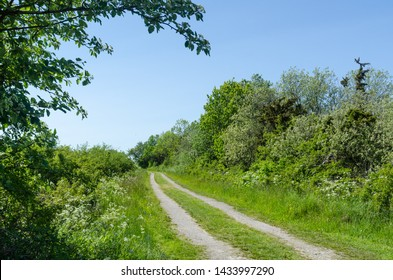 Winding dirt road through a colorful green meadow by spring season at the swedish island Oland