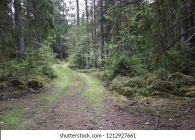 Winding dirt road through a coniferous forest