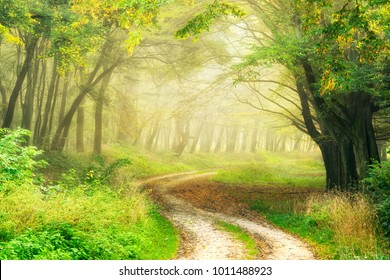 Winding Dirt Road through Forest in the Warm Light of the Morning Sun