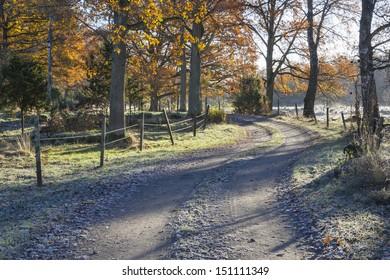 Winding dirt road through oak forest