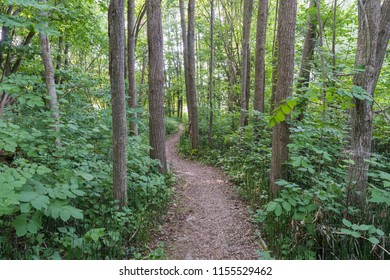 Winding footpath through a green lush deciduous forest