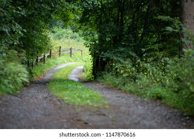 Winding Forest Trail