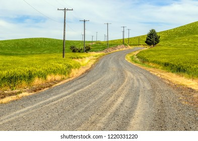 Winding gravel country road and telephone poles in rolling hills green with spring wheat in the Palouse region of eastern Washington, USA,for rural, agricultural, and travel motifs