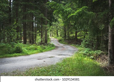 A winding gravel road going through the forrest in the summer