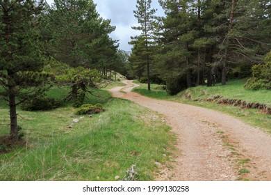 Camino de tierra montañosa sinuosa entre los árboles