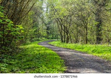 Winding path along the woods in the Gower Wales