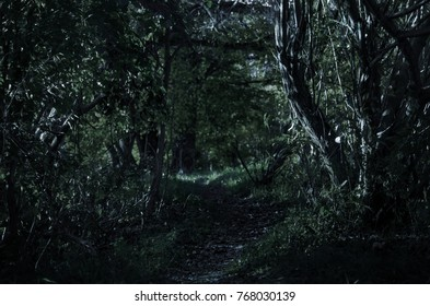 A winding path leading through a young forest in the night