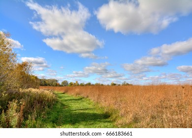 A winding path through a beautiful field of grass with a blue, cloud filled sky.