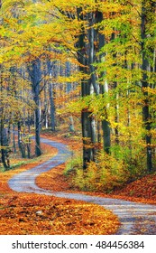 Winding pathway through gorgeous autumnal forest