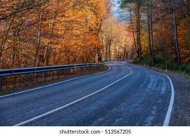 Winding road curves through autumn trees