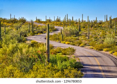 Winding road cuts thru Organpipe Naitonal Monument, Arizona.