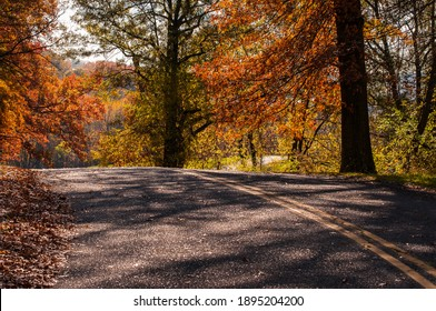 Winding road in the forest during fall. Fall leaf color affects the normal green leaves of many trees and shrubs by which they take on, during a few weeks in the fall season.