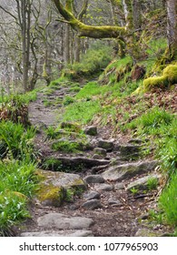 winding rocky forest pathway leading up a steep hill with overhanging mossy trees in dense woodland