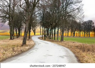 Winding rural avenue with bare trees at sunset in autumn