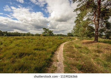 Winding sand path through a nature reserve with heather plants and pine trees. It is sunny and cloudy day in the Dutch spring season.
