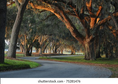 a winding short drive through old live oaks with Spanish moss