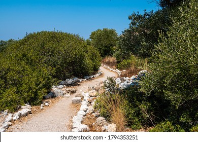 Winding soil path road through sunny green maquis tree