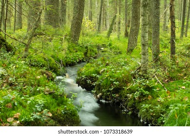 winding stream in lush green forest long exposure